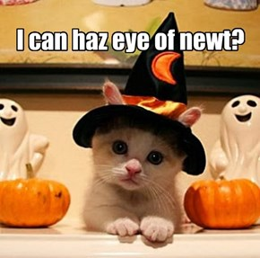 I can haz eye of newt?