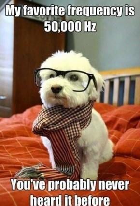 Hipster Hertz