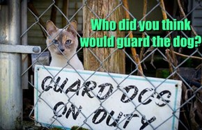 Who did you think would guard the dog?