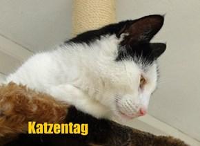 Katzentag