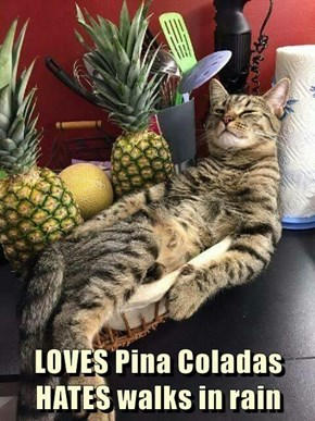 LOVES Pina Coladas                HATES walks in rain