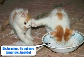 Even as a yung kitten Thuggo had a brite future ahed ob hims!
