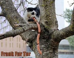 Frank Fur Tur