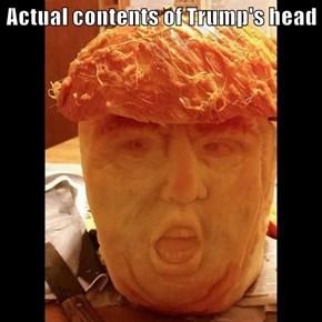 Actual contents of Trump's head