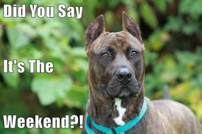 Did You Say It's The Weekend?!