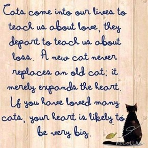 For all of us who have lost a cat and had the heart to get another