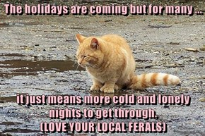 The holidays are coming but for many ...  it just means more cold and lonely nights to get through.                                               (LOVE YOUR LOCAL FERALS)
