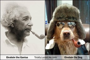 Einstein the Genius Totally Looks Like Einstein Da Dog