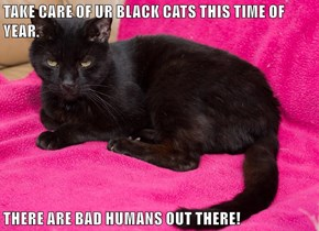 TAKE CARE OF UR BLACK CATS THIS TIME OF YEAR.  THERE ARE BAD HUMANS OUT THERE!