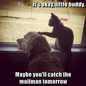 It's okay, little buddy.  Maybe you'll catch the                    mailman tomorrow