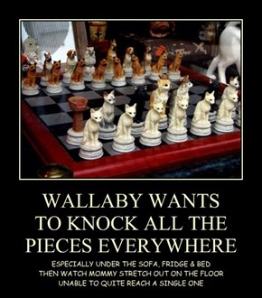 WALLABY WANTS TO KNOCK ALL THE PIECES EVERYWHERE