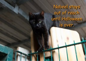 Nabeel stays out of reach until Halloween is over.