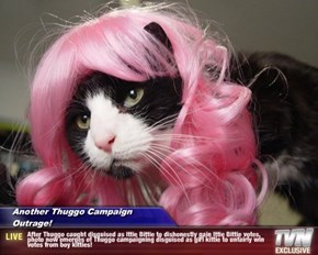 Another Thuggo Campaign Outrage! - After Thuggo caught disguised as Ittie Bittie to dishonestly gain Ittie Bittie votes, photo now emerges of Thuggo campaigning disguised as girl kittie to unfairly win votes from boy kitties!