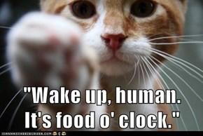"""Wake up, human.            It's food o' clock."""