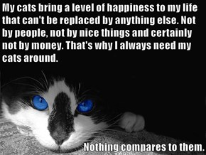 My cats bring a level of happiness to my life that can't be replaced by anything else. Not by people, not by nice things and certainly not by money. That's why I always need my cats around.   Nothing compares to them.