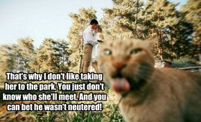 That's why I don't like taking her to the park. You just don't know who she'll meet. And you can bet he wasn't neutered!
