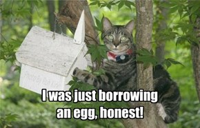 I was just borrowing an egg, honest!