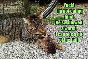 Yuck!  I'm not eating him! He swallowed  a worm! I can see a bit  of the tail!