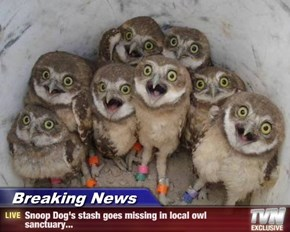 Breaking News - Snoop Dog's stash goes missing in local owl sanctuary...
