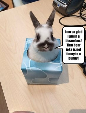 Hey Rabbit, does...