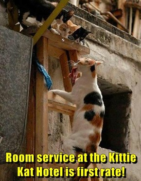 Room service at the Kittie Kat Hotel is first rate!