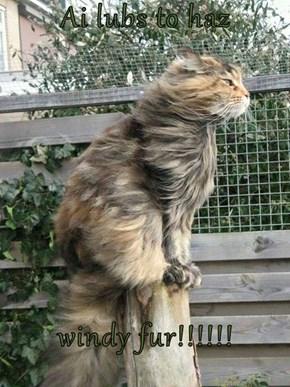 Ai lubs to haz  windy fur!!!!!!