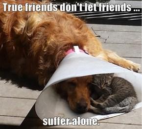 True friends don't let friends ...  suffer alone.