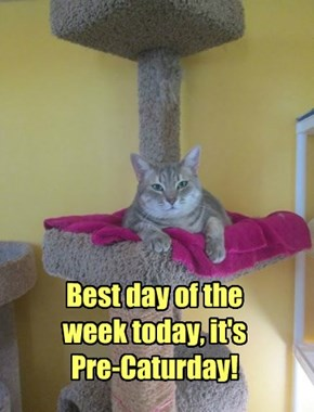 Best day of the  week today, it's Pre-Caturday!