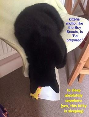 "kittehs' motto, like Boy Scouts, is ""Be prepared"""