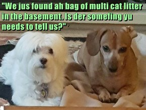 """We jus found ah bag of multi cat litter in the basement. Is der somefing yu needs to tell us?"""
