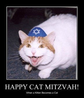 HAPPY CAT MITZVAH!