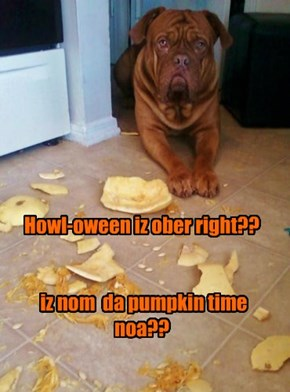 Those pumpkins are just so nommy!