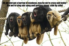 Oh we aint got a barrow of monkeys, may be we're crazy and funky!