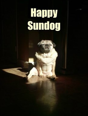Happy  Sundog
