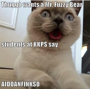 Thuggo wants a Mr. Fuzzy Bear students at KKPS say AIDOANFINKSO