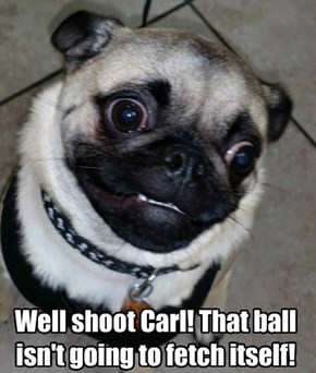 Well shoot Carl! That ball  isn't going to fetch itself!