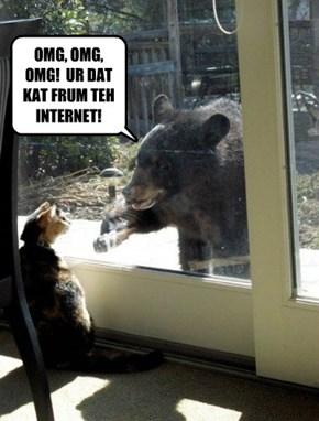 AOL - Animals Online