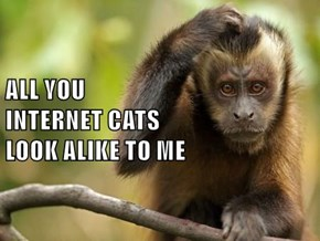 ALL YOU                                                                                      INTERNET CATS                                                              LOOK ALIKE TO ME