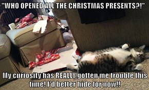 """""""WHO OPENED ALL THE CHRISTMAS PRESENTS?!""""  My curiosity has REALLY gotten me trouble this time! I'd better hide for now!!"""