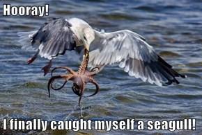 Hooray!  I finally caught myself a seagull!