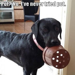 Pot? No. I've never tried pot.