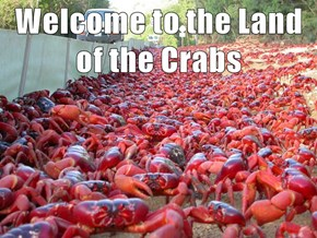 Welcome to the Land of the Crabs