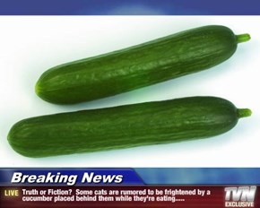 Breaking News - Truth or Fiction?  Some cats are rumored to be frightened by a cucumber placed behind them while they're eating.....