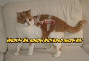 What?? No, puppy! NO!! Keep away! No!