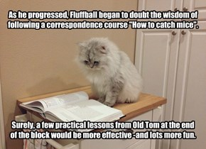 "As he progressed, Fluffball began to doubt the wisdom of following a correspondence course ""How to catch mice"".           Surely, a few practical lessons from Old Tom at the end  of the block would be more effective -and lots more fun."