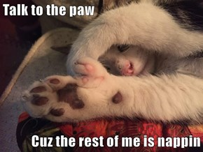 Talk to the paw  Cuz the rest of me is nappin