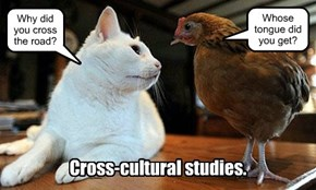 Cross-cultural studies.