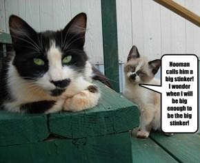 Sigh, Always the little stinker!