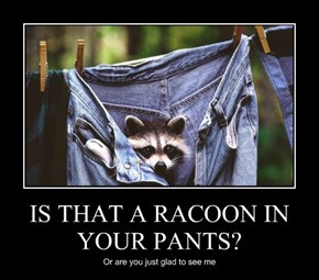 IS THAT A RACOON IN YOUR PANTS?