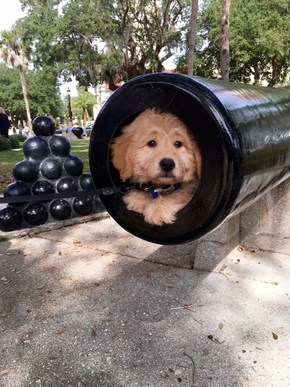 And Now for the Main Event: The Doggie Cannon Ball!